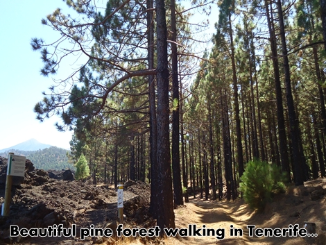 Tenerife_walking